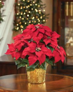 Christmas Flowers for Our Friends